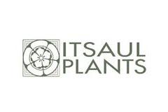 ItSaul Plants