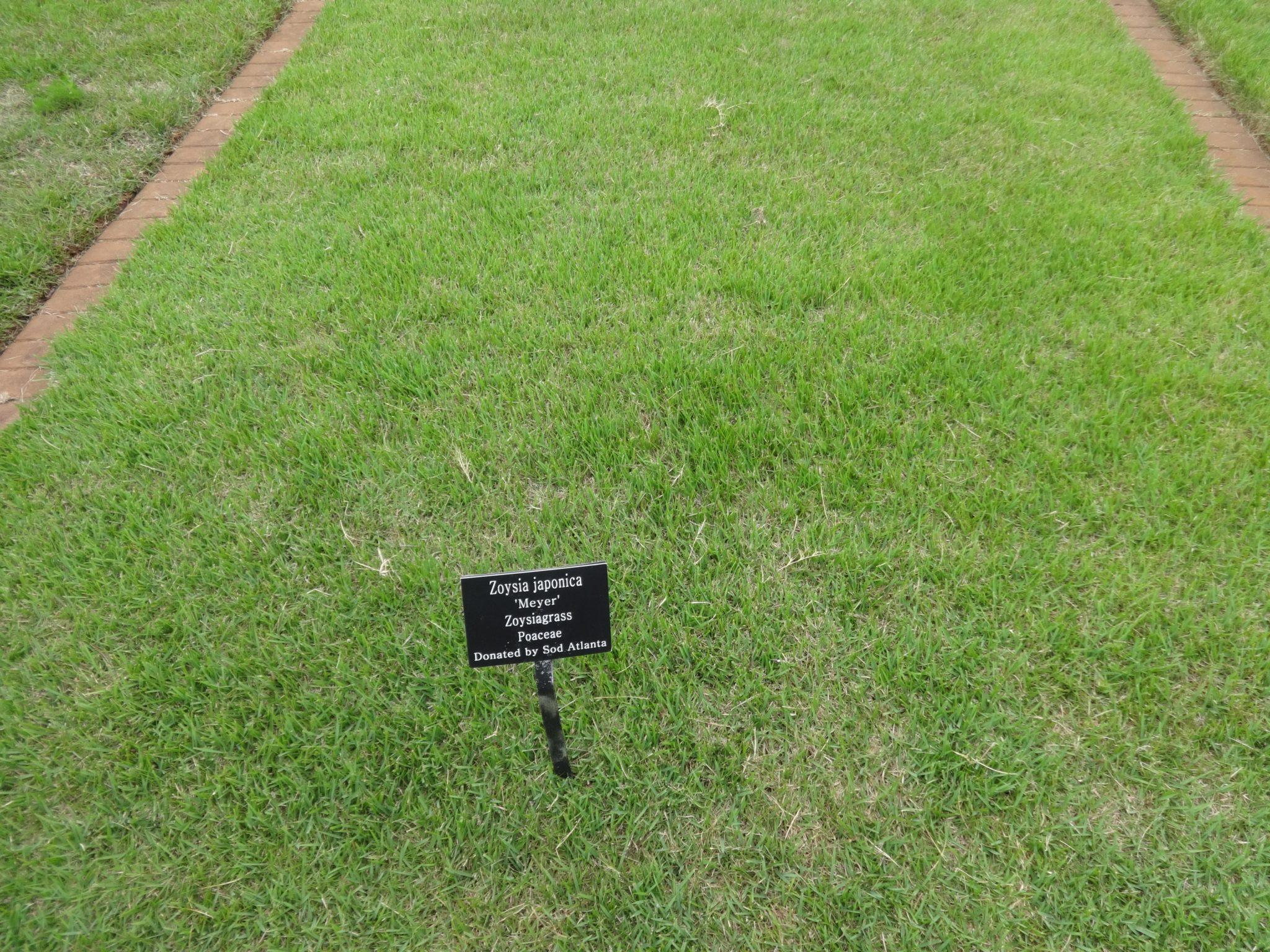 Zoysiagrass Lawns