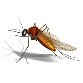 what happens to west nile virus in the winter