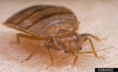Information from Southern Region IPM on Bed Bug Management!