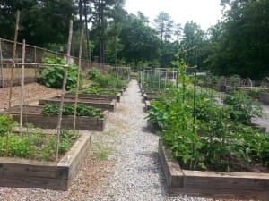 These 4' X 8' beds can grow alot of vegetables!