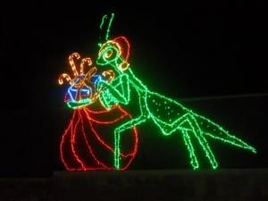From the Atlanta Botanical Garden's Christmas Light Show