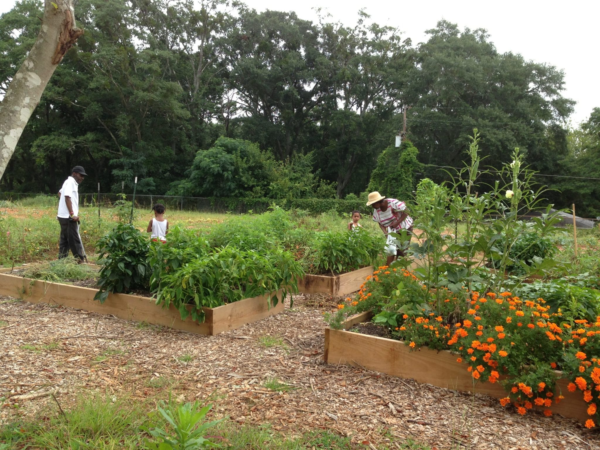 2013 08 08 095850 - Garden Life