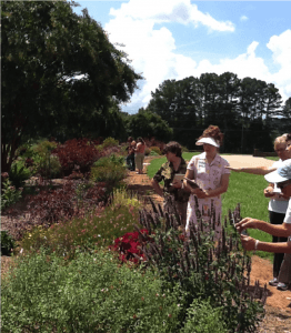 Conservation Garden - Bee, Butterfly and Beneficial Insects