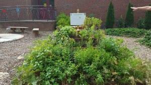 The Due West Elementary School Garden