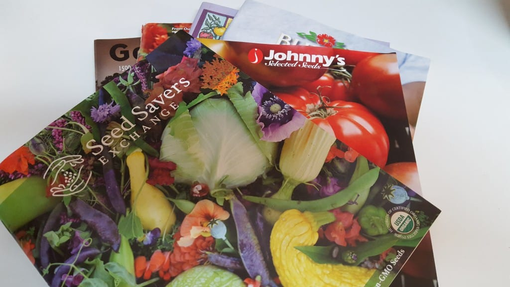 The seed catalogs are here