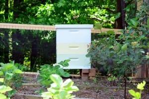 Pollinator Protection Plan for Georgia