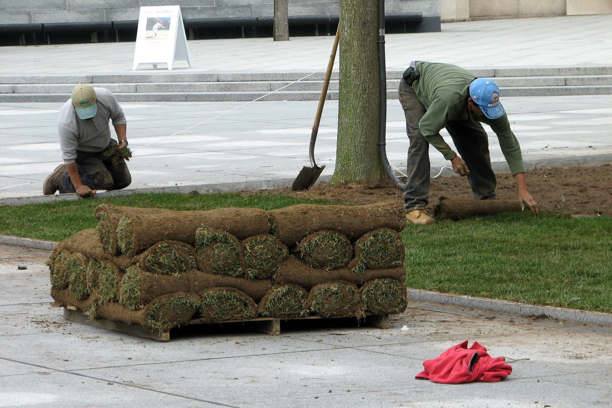 The Sod Forecast has Arrived