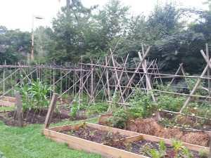 June Chores for Your Georgia Garden