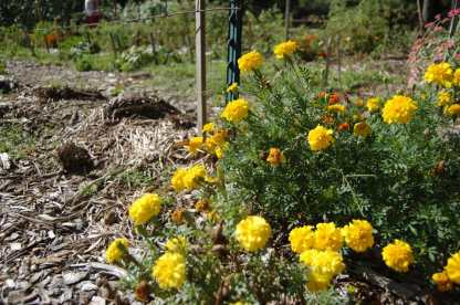 Pollinator Spaces Project Update