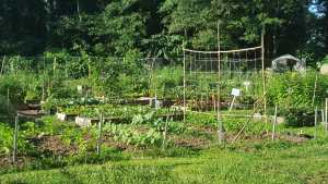 Warm-Season Vegetable Planting Chores for Georgia