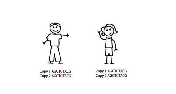 SNP genotyping and Genome Wide Association Studies (GWAS)