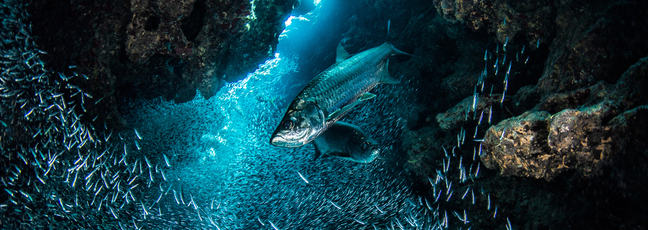 An underwater shot of schools of fish