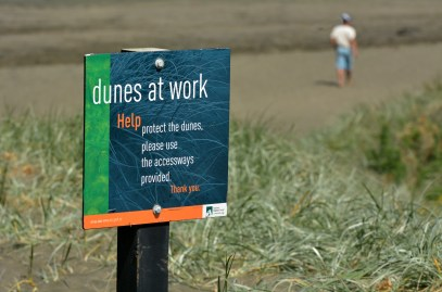 Dune restoration Muriwai New Zealand.The sand dunes and coastal environments are one of the most important and most degraded landscapes in New Zealand. Image Credit: ChameleonsEye / Shutterstock.com