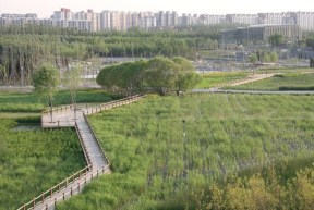 Revitalization of wetlands/rivers to balance the urban water cycle