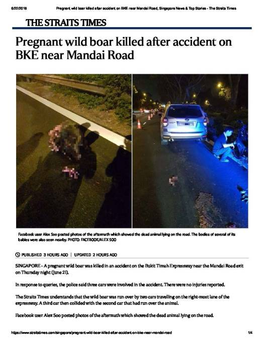 Pregnant wild boar killed after acciden.._Page_1