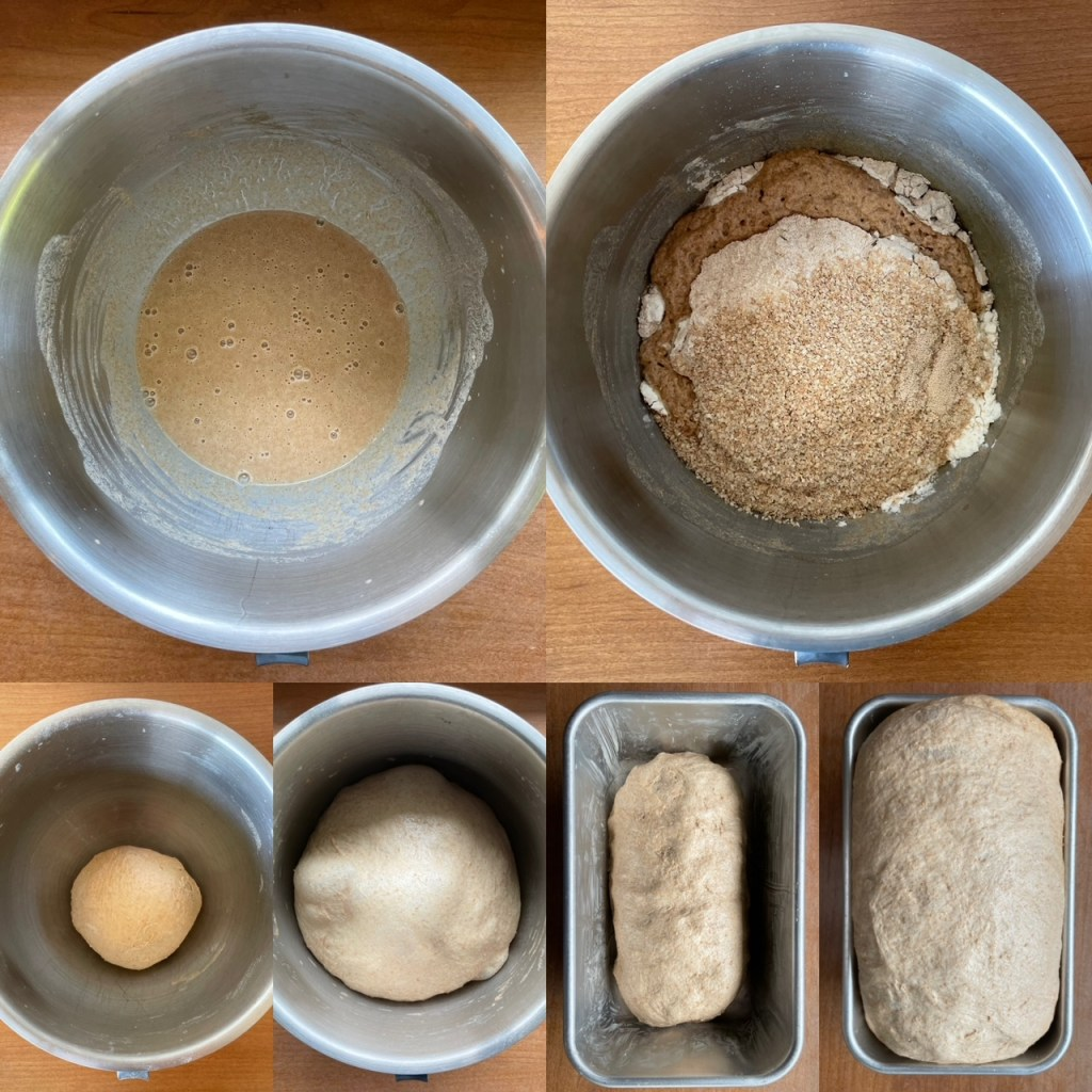 the series of steps in making the honey wheat bread recipe from starter to final bread loaf