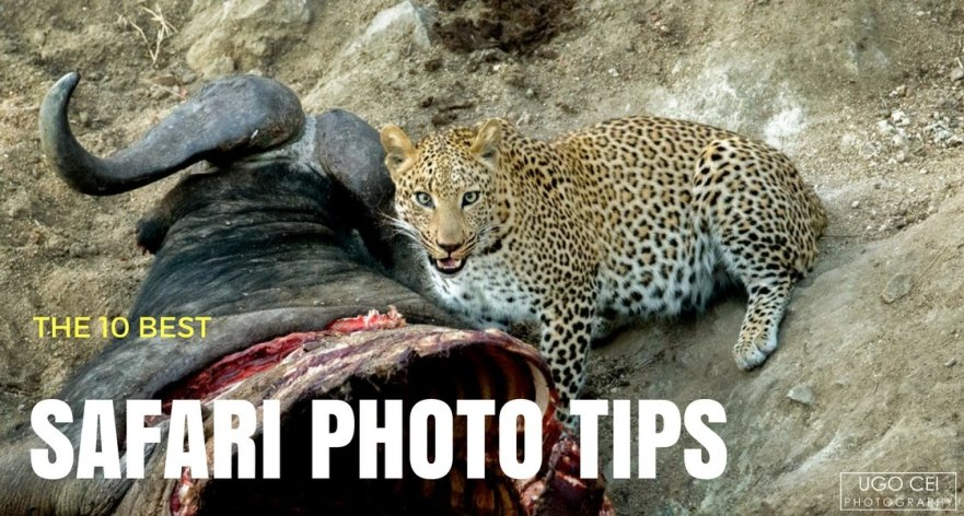 Essential Safari Photography Tips