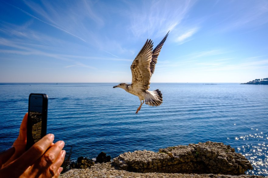 Seagull flying, Antibes, France