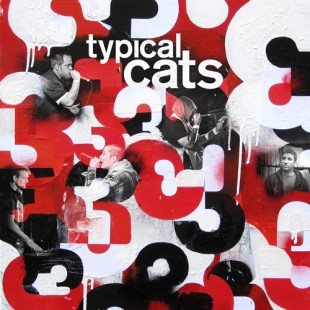 typical-cats-3