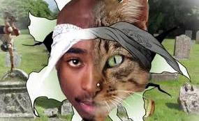 tupac-cat-video