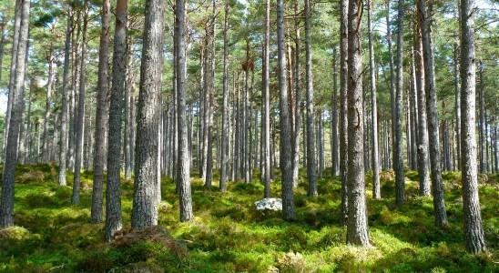 bosque medio ambiente