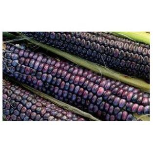Organic Non-GMO Hopi Blue Corn