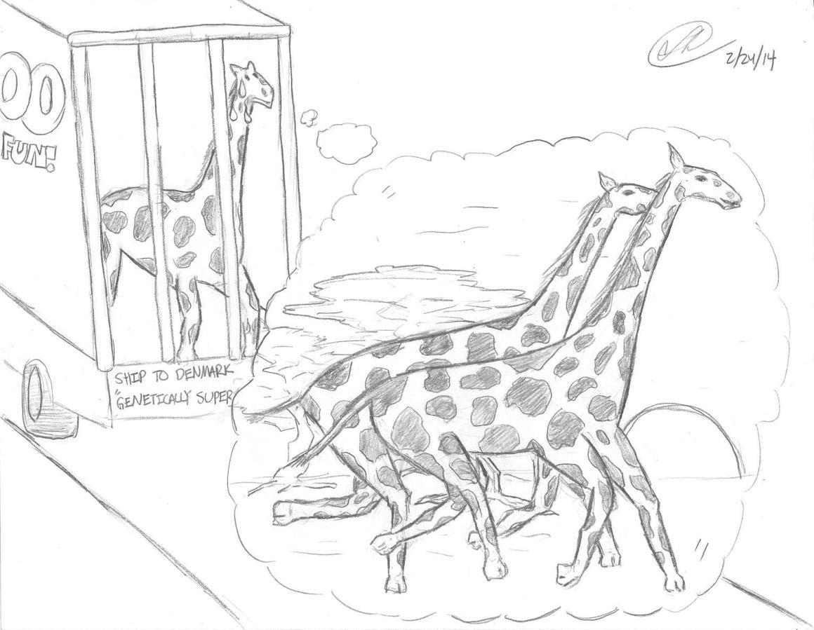 Zoo askew