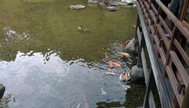 Tea Garden fish
