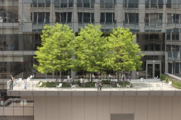 roof garden trees Chicago Roofs Are Soon To Be The Greenest In The US! See