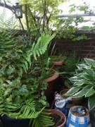 nog meer bos :)) (c)uilentaal