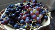 buurvrouws druiven - ongekrent (c)uilentaal