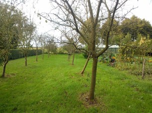 De kale pruimenbomen