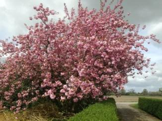 De boom op 13 april