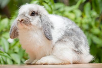 Met een konijnenhok bouwtekening werken