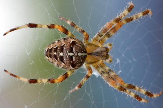 Spin uitjebewust