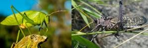 De krekel en de sprinkhaan uitjebewust