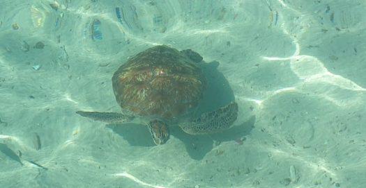 De schildpad uitjebewust