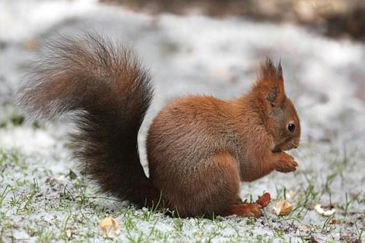 De eekhoorn uitjebewust