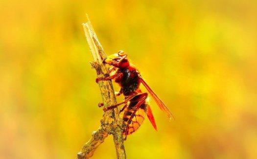 Hoornaar uitjebewust