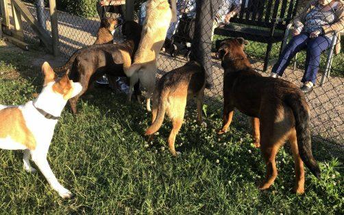 Bewoners met de honden in contact