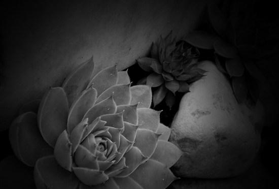 Rose Ausländer költeményei
