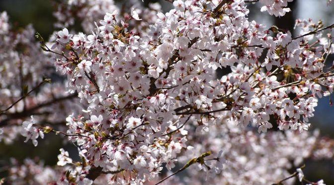 Japán szerelmes versek a VIII. századból