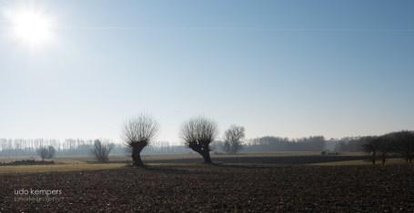 Niederrhein VI