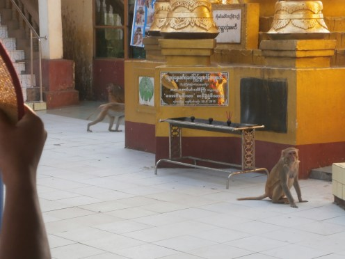 Monkeys everywhere!