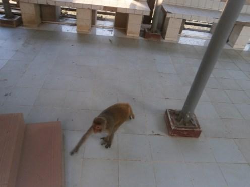 Waaahhh!!! A monkey is following me~!