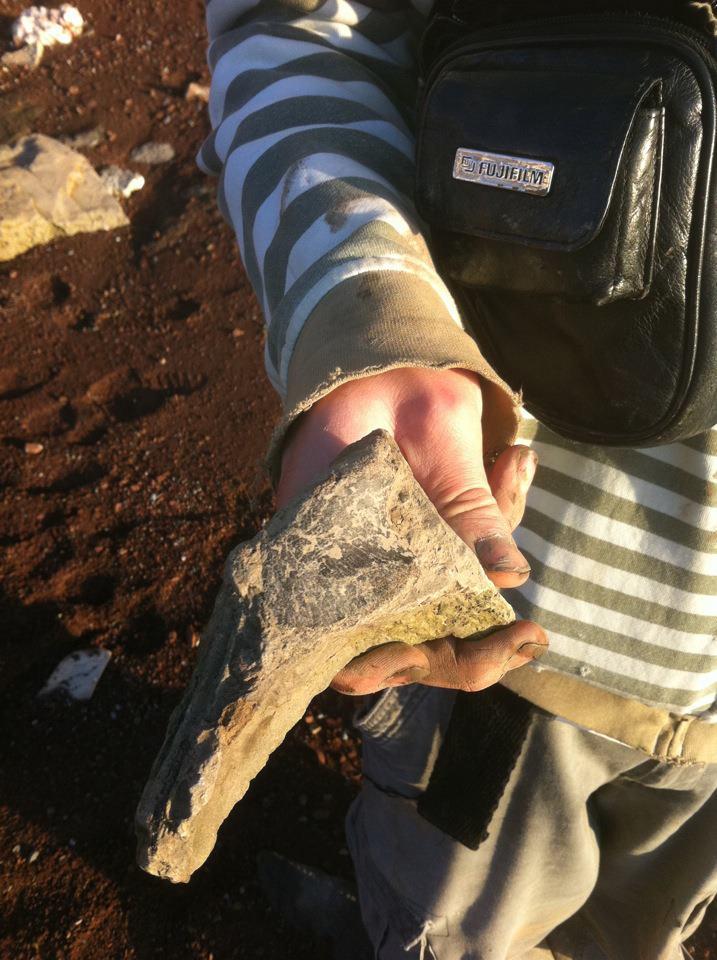 AustPLEISOSAUR PADDLE BONE
