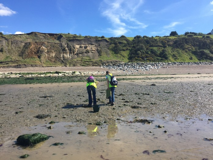 The Thanet Formation exposed at low tide