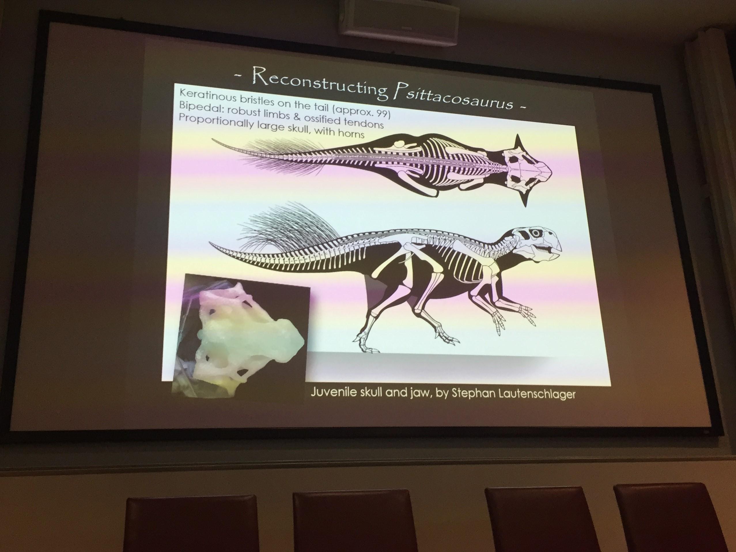 Reconstructing Psittacosaurus