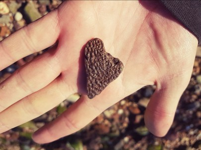 Tionyx turtle shell found by Emma Philpott